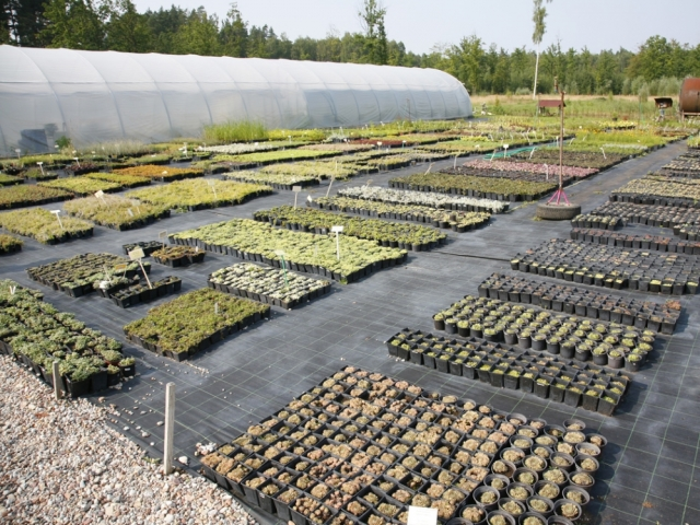 "Tree and plant Nursery ""Dimzas"""